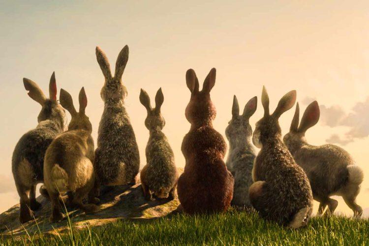 Netflix tra i conigli: analisi di un adattamento