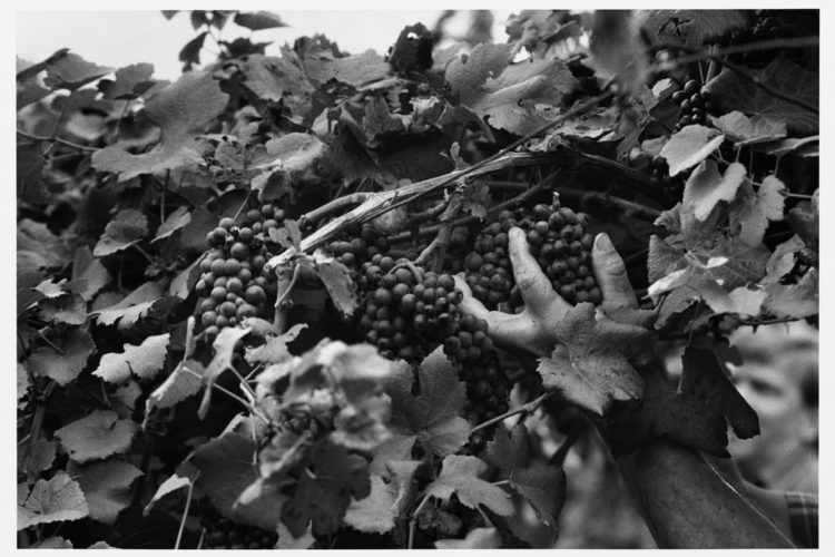 """""""Undici fotografi un vino"""""""